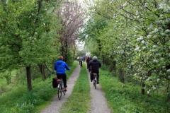 Fietsexcursie-Aarle-Rixtel-12-april-2014-166