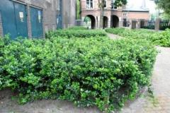 Gluren-bij-de-buren-76